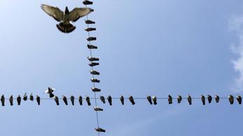 Áramütés okozta több mint félezer madár halálát Magyarországon