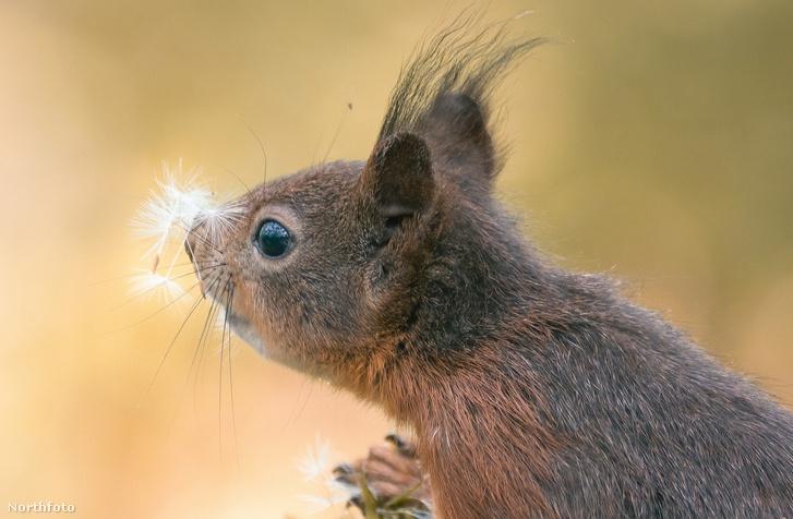 tk3s sn squirrel sniff 08