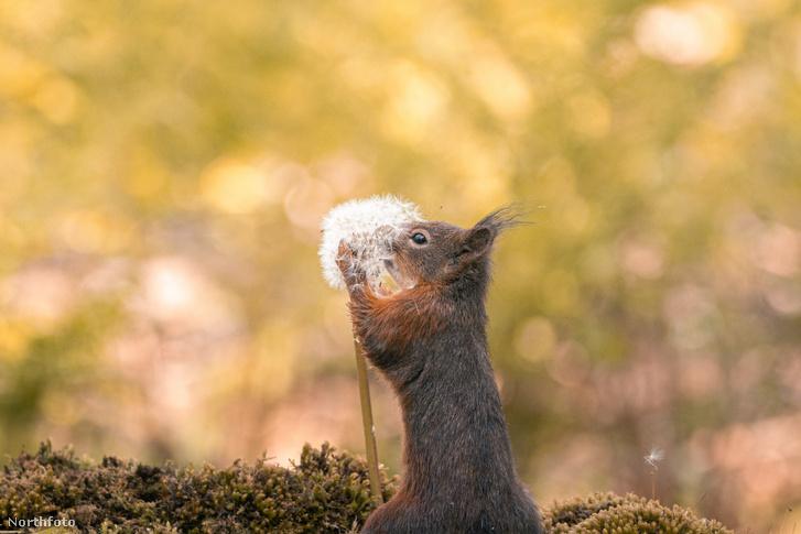 tk3s sn squirrel sniff 01