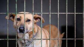 Rejtélyes kór tizedeli a kutyákat