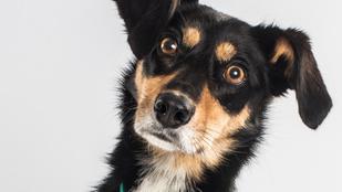 Videós kísérlet: melyik gazdáját szereti jobban ez a kutya?