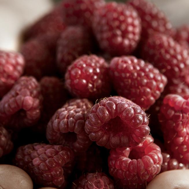 Akár a diétába is beilleszthető az egészséges málna: tele van antioxidánssal