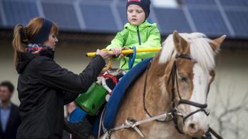 Lovasterápia: használ a gyermeknek, és élvezi a ló is