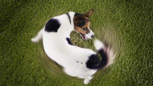 Fű- és kakievés, ásás és még 8 fura kutyaviselkedés: elmondjuk, miért csinálja