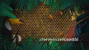 A kaptár kulisszái mögött: így készítik a méhek a mézet