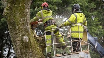 Költési időszakban vágtak ki fákat Szegeden