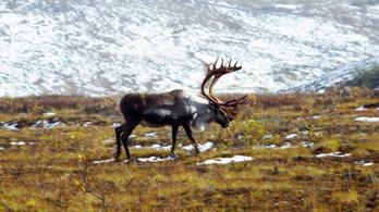 Joe Biden betiltotta az olajfúrást az Északi Sarkon