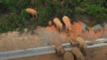 Hatalmas pusztítást végez Kínában egy vándorló vadelefántcsorda