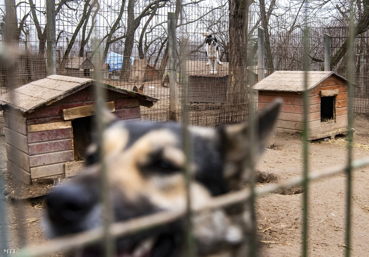 Kutyák a budapesti NOÉ Állatotthonban 2021. február 7-én