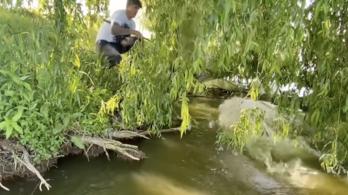 Harcsa rántotta vízbe a horgászt