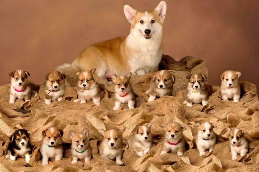 A fotósnak sikerült lekapnia a népes családot a tökéletes pillanatban, ami valószínűleg nem volt egyszerű ennyi eleven kölyök társaságában.