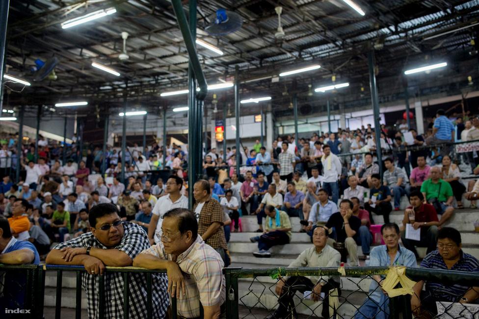 Bár Thaiföldön a fogadás csak a lóverseny és az állami lottó esetében engedélyezett, ennek ellenére a helyiek hangos rikoltozással emelik a tétet, ami akár 2000- 3000 Bath (15-21 500 Ft) is lehet. Ősszehasonlításként, egy átlagos halász fizetése alig éri el a 3000 Bath-ot havonta, ami kb. 22 500 Ft.