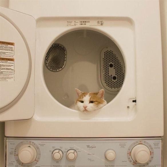 Ok, szóval mit keres a macska a szárítógépben?