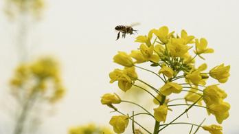 Méhekkel is lehet Covid-tesztet végezni