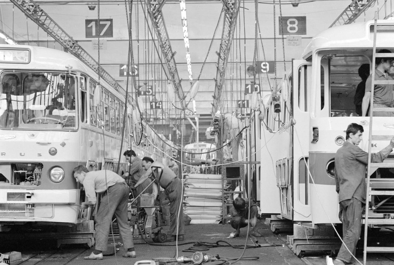 Sorozatban készülnek az Ikarus 556-os városi autóbuszok az Ikarus Jármű- és Karosszéiragyár mátyásföldi üzemében, ahol ötvenpercenként gördül le a futószalagról egy kész busz 1971. június 15-én