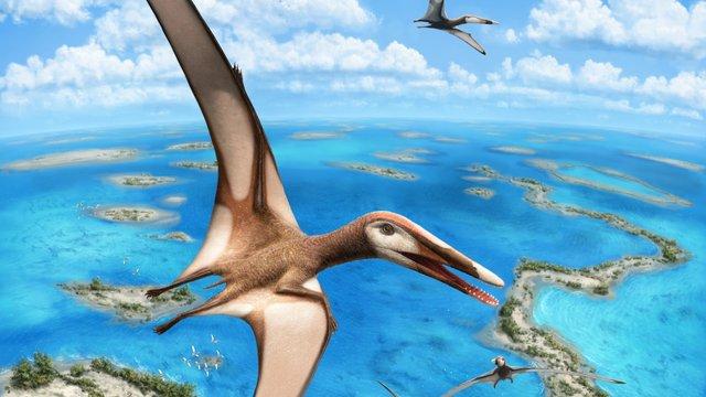 Nagy jelentőséget tulajdonítottak a kis pteroszaurusznak