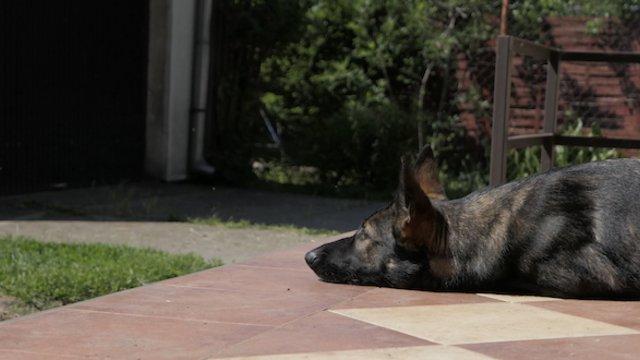 Kutya sóhajt a te életedbe is!