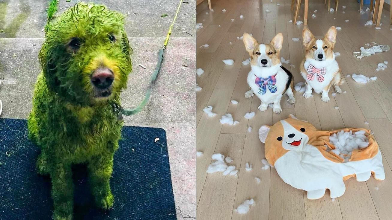 vicces-kutyák-borító