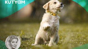 Ha ismered kutyád ösztöneit, ilyen hatékony lehet a kölyök-nevelés!