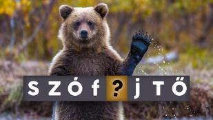 Szófejtő: innen ered a Lássuk a medvét! szólásunk