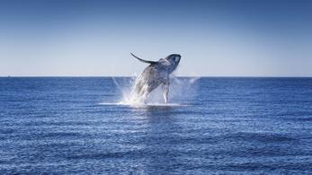 Elnyelte a bálna az amerikai halászt
