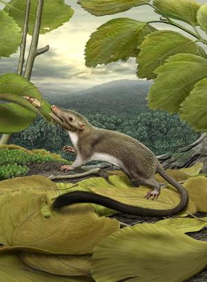 Common ancestor 300dpi