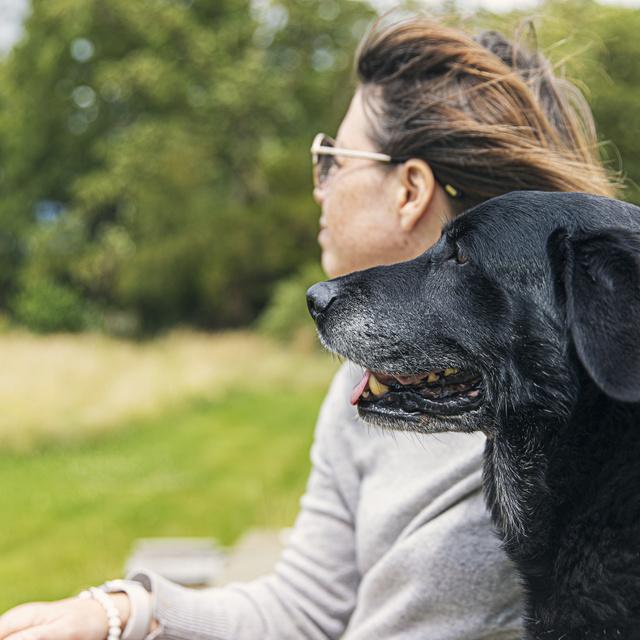 Emberi mértékkel egy szemvillanás, kutyaként egy egész élet: kedvencünk mellettünk öregszik meg, és mi elkísérjük útján