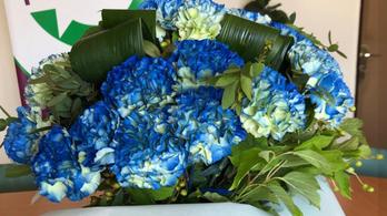 Hígító szagú virágot kapott Szabó Tímea Kövér Lászlótól, nem örült neki