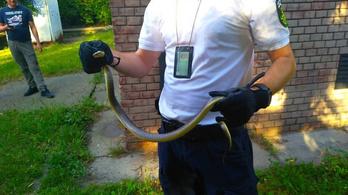 Kígyót fogtak Józsefvárosban
