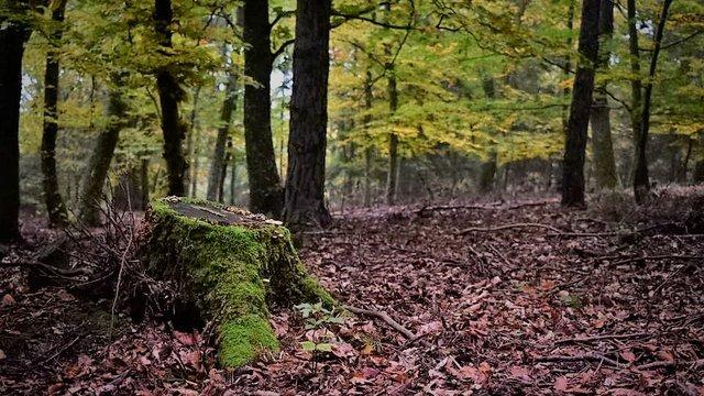 A misztikus erdő, ahol minden mohás