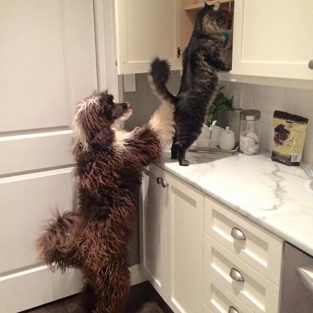 Gyönyörű fotókon az állatok segítőkészsége: mindig ott vannak a nehéz pillanatokban
