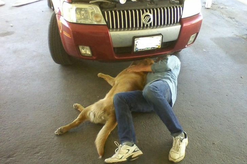 A kutya mindenben segít gazdájának: még az autószerelésnél is próbálja magát hasznossá tenni.