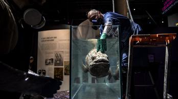 Száz évig is élhet az eleven fosszília