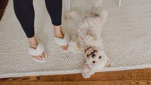 Dörgölőző kutyák: mi az oka, hogy folyton a szőnyegen hempereg?