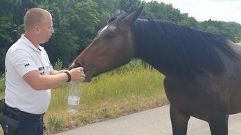 Vízi rendőr fékezte meg az elszabadult lovat
