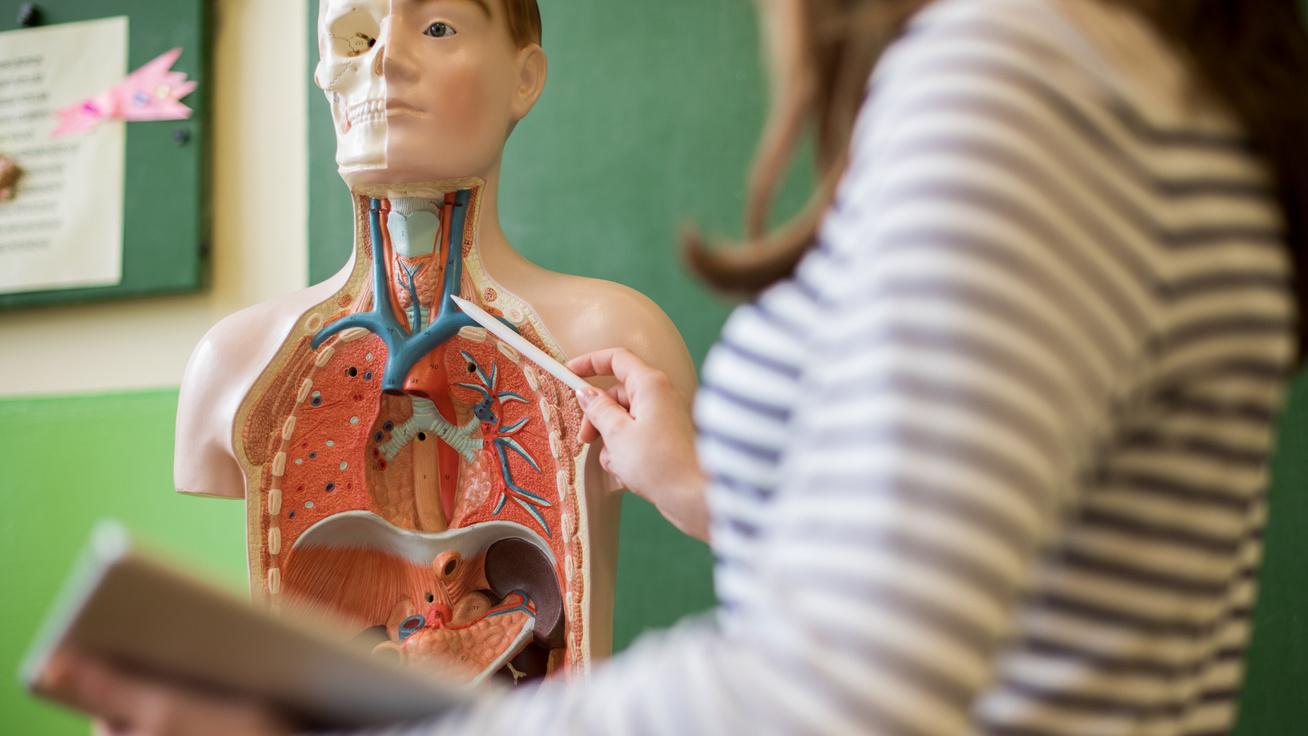 emberi test tanár