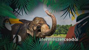 Nehéz elképzelni: az elefánt gyorsabban szívja fel a vizet, mint a japán gyorsvasút sebessége