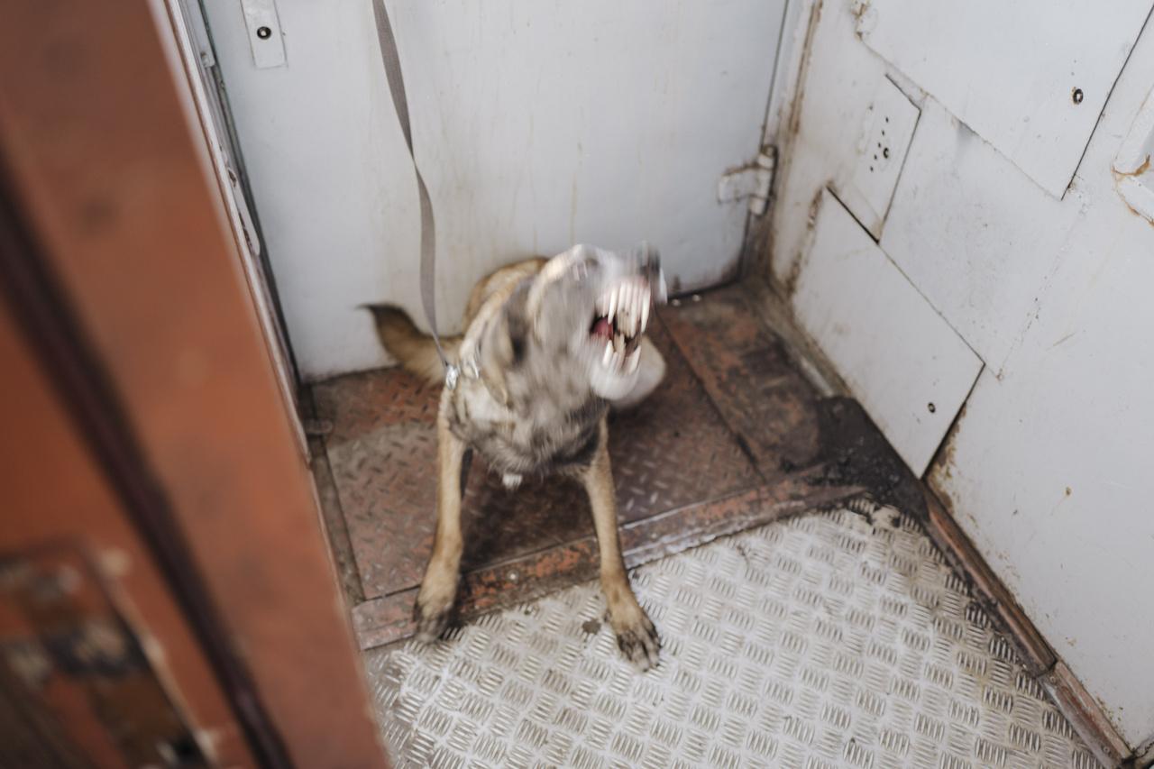 A rendőrség rendszeresen ellenőrzi nyomkereső kutyákkal a vonatokat, különösen a magas bűnügyi statisztikákat mutató területeken. 2019. szeptember 25.