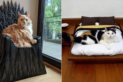 elkényeztetett-macskák-borító