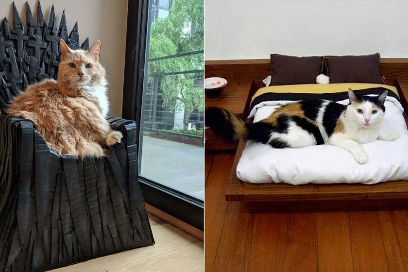 Ezek a macskák úgy élnek, mint a királyok: vicces fotók arról, mennyire elkényeztetik őket