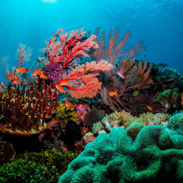 Nagy veszélyben van a világ legnagyobb korallzátonya: már az UNESCO is aggódik