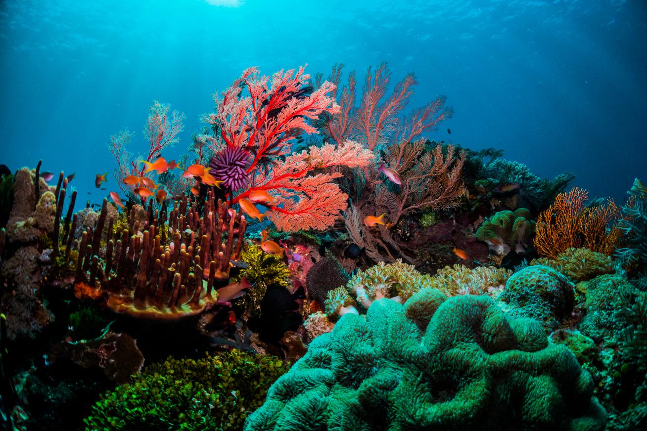 nagy-korallzátony2