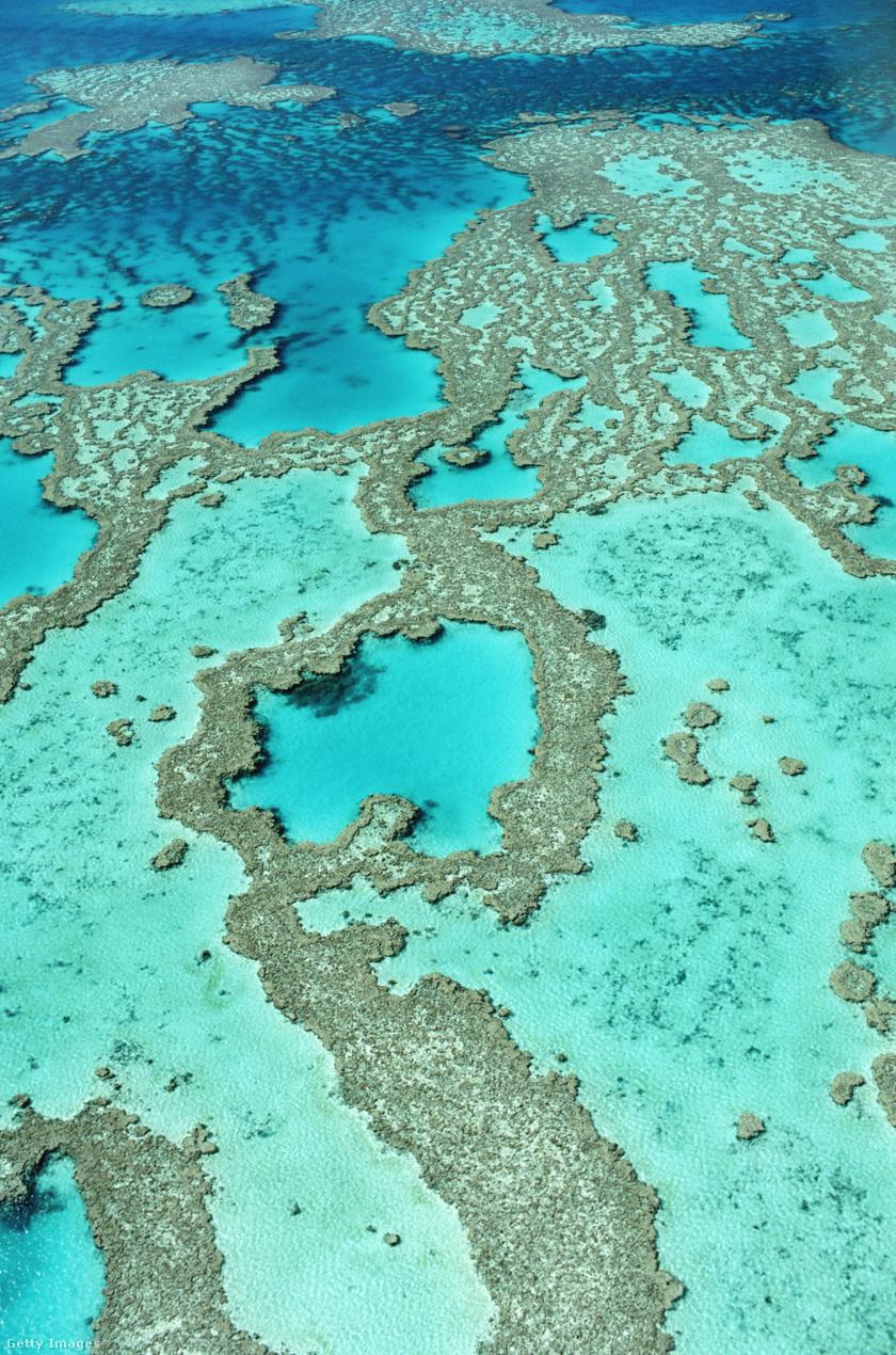 nagy-korallzátony1