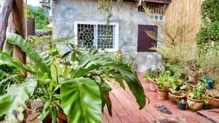 Erre a 3 dologra mindenképpen figyelj, ha kiköltöztetnéd a szobanövényeket a kertbe