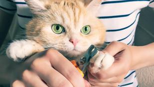 Le kell vágni a macska karmát? Az állatorvos válaszol