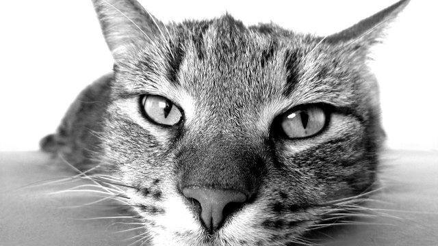5 dolog, amit megtanulhatsz a macskáktól