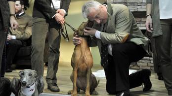 Jön a budapesti vadászati világkiállítás, kitömött állatokra eddig csaknem 50 millió költöttek