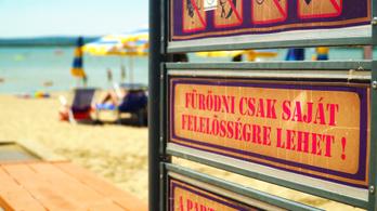 A tömeges halpusztulás sem vette kedvét a strandolóknak
