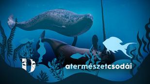 A tengerek unikornisai a holtakat is feltámasztották
