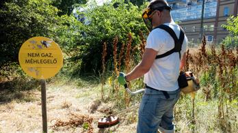 Lekaszálta a méhlegelőt a Fidelitas